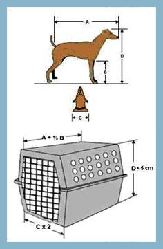 Medindo seu animal de estimação